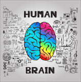 Left and right brain functions with doodles Royalty Free Stock Images