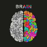 Left and right brain hemisphere. Vector concept illustration. Royalty Free Stock Photo