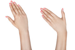 Left and right female hand. Stock Image