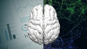 Left and right human brain partition concept. Logic hemisphere and creative hemisphere