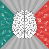 Left and right parts of brain Royalty Free Stock Photos