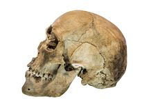 Left side view of human skull. Royalty Free Stock Images