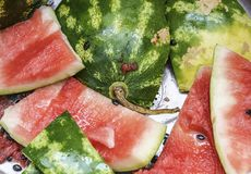 Leftovers of a watermelon Royalty Free Stock Images