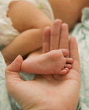Leg baby in hand mom. Little foot baby in hand mom Royalty Free Stock Image