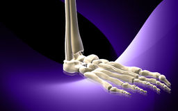 Leg bone Stock Photo