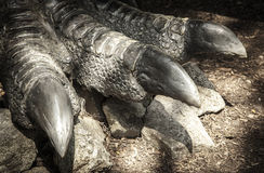Leg of dinosaur Allosaurus Royalty Free Stock Photos