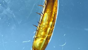 Leg of an Insect. Detailed Microscopic Footage of insect leg stock video