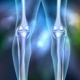 Leg joint anatomy Royalty Free Stock Photo