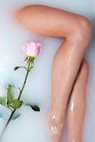 Leg of woman and rose. Leg of woman and pink rose in water with milk Royalty Free Stock Photo