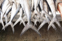 Lega il mercato dei frutti di mare del tonno Immagini Stock