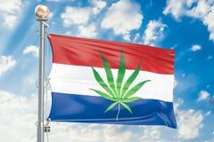 Legalizzazione della cannabis nei Paesi Bassi, bandiera con la prateria della marijuana illustrazione vettoriale