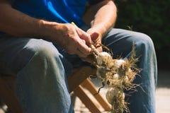 Legame dell'uomo anziano le teste dell'aglio nostrano Fotografia Stock Libera da Diritti