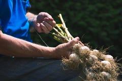 Legame dell'uomo anziano le teste dell'aglio nostrano Fotografia Stock