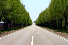 Lege asfaltweg bij platteland, bomen aan beide wegkanten Royalty-vrije Stock Afbeelding