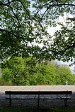 Lege bank in het midden van een park onder een groene boom Stock Foto's