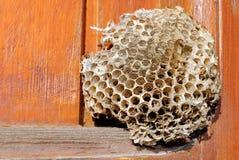 Lege bijenbijenkorf Stock Foto's