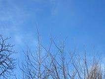 Lege bomen, blauwe hemel, wolken, niemand, Royalty-vrije Stock Fotografie