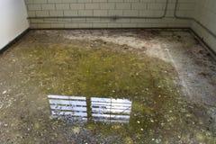 Lege cel, bars op vensters Stock Fotografie