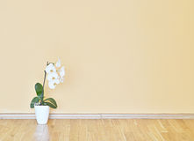 Lege gele muur en houten vloerruimte Stock Afbeeldingen