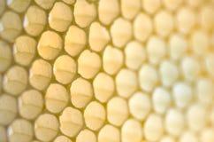 Lege Honingraat Stock Afbeeldingen