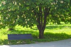 Lege houten bank onder de tot bloei komende kastanje in het centrale park in een zonnige de lentedag royalty-vrije stock fotografie