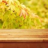 Lege houten deklijst over de herfstbladeren Royalty-vrije Stock Foto