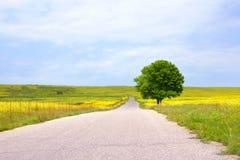 Lege landelijke weg onder groene gebieden met gele bloemen en een eenzame grote groene boom met een mooie ronde kroon royalty-vrije stock afbeeldingen