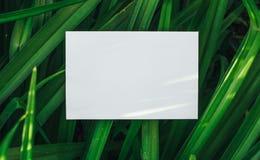 Lege nota met groene bladeren royalty-vrije stock fotografie