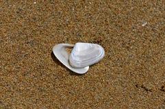 Lege overzeese shell op het gouden zand bij het strand royalty-vrije stock fotografie