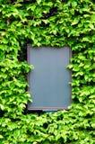 Lege raad die door bladeren van klimop, close-up wordt omringd Stock Foto