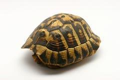 Lege schildpadshell Stock Foto's