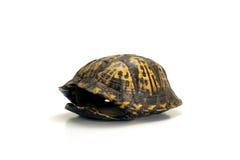 Lege schildpadshell op wit Stock Foto