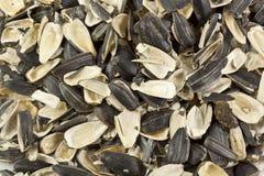 Lege shells van zonnebloemzaden Royalty-vrije Stock Afbeelding