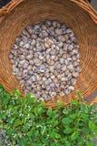 Lege slakshells verzamelden in de mand dichtbij het restaurant, nadat de slakken bezoekers aten stock foto's