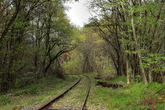 Lege spoorweg in de herfstbos Stock Fotografie