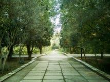 Lege straat bij de aardige en comfortabele tuin bij de ochtend royalty-vrije stock foto