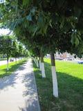 Lege straat dichtbij de weg met bomen in de stad Royalty-vrije Stock Foto