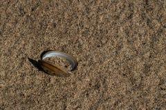 Lege tweekleppig schelpdiershell op zand royalty-vrije stock afbeeldingen