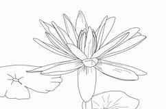 Lege waterlelie met bladeren voor het schilderen Royalty-vrije Stock Fotografie