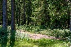 lege weg in het platteland in de zomer Stock Afbeelding