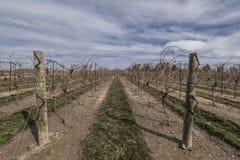 Lege wijngaard Royalty-vrije Stock Fotografie