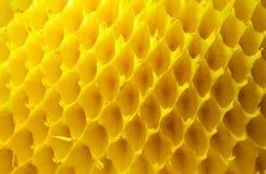 Lege zonnebloemcellen Stock Foto's