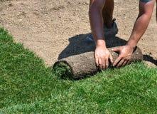 Legen der Grasscholle stockbilder