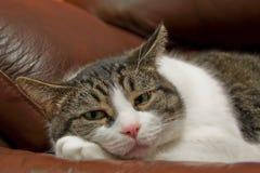 Legen der Katze Lizenzfreie Stockbilder