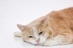 Legen der traurigen Katze Stockfotos