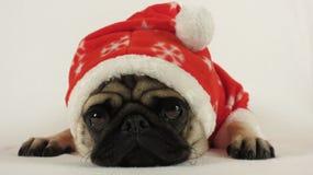 Legen von Pug mit Sankt-Kostüm Lizenzfreie Stockfotos