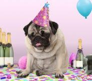 Legend tragender Parteihut des Pughündchens, auf den Konfettis hin, getrunken auf Champagner mit Kater, lizenzfreies stockfoto
