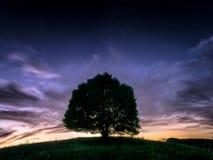 Legendariskt enda träd II arkivbild