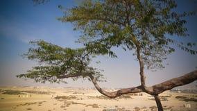 Legendariskt träd av liv, Bahrain öken arkivfoton