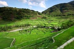 legendarni ryżowi tarasy zdjęcia stock